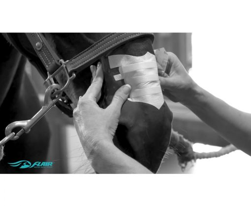 Flair Equine Nasal Strip Application Process